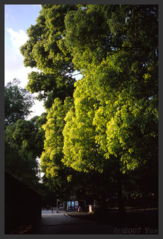 KLASSE Sの写真(傾く日差し)[KLASSE S, F8.0, 1/60, RDP III]