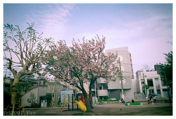 公園の木[Frogeye, CENTURIA SUPER200]